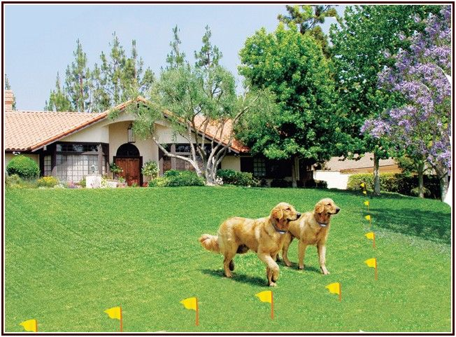 117 best Wireless Dog Fence images on Pinterest | Wireless dog fence ...