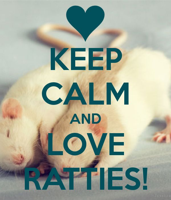 KEEP CALM AND LOVE RATTIES!