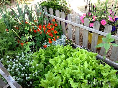 83 best Container Gardening LaS VeGaS style images on Pinterest