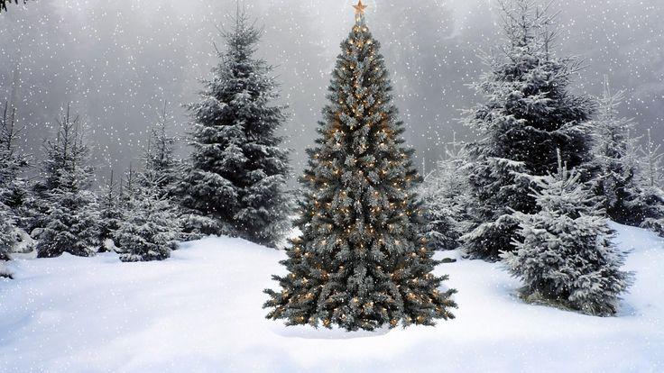 1920x1080 Обои елки, гирлянды, звезда, снег, зима, лес, новый год, рождество