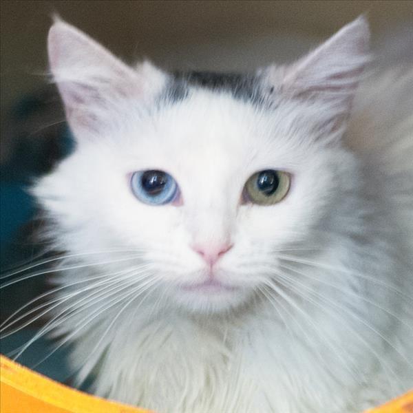 I found this pet on www.sdhumane.org http://getpet.info/Rebecca_SDHSCA_05