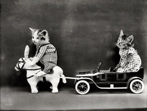 "Hybrid Power:1914. ""Kitten in costume on mule pulling kitten in toy touring car.""  Photo by Harry W. Frees."