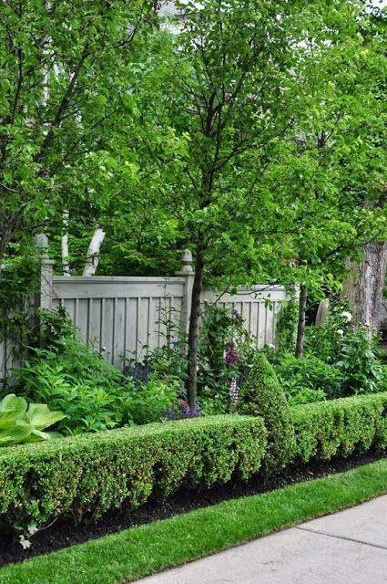 Clipped boxwood hedges with conical accents adds variety to the straight hedge. Staggered low to high plantings lead up to hard boundary of fence. The semi-formal fence built with vertical and horizontal elements, plus the well proportioned finials makes the eye stop and look for more details. Nice concept.