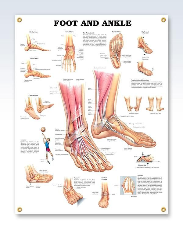 Foot And Ankle Chart 20x26 Nurse Practitioner Pinterest Ankle