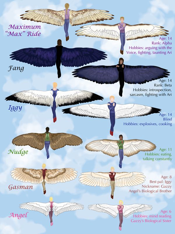Different wings of the characters of Maximum Ride, wish Dylan was in there so I could rip his off and feed them to Ari! :D