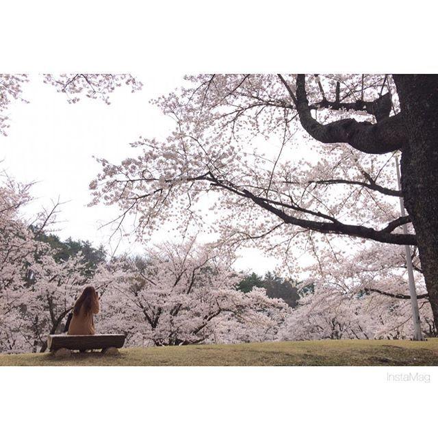【eriiiii_0430】さんのInstagramをピンしています。 《桜すごいキレイだったなあ😌💟 . また来年も花見できたらいいな🌼 . #桜 #お花見 #はっぴー野郎 #いい感じに撮れた #いい写真 #キレイ #逢瀬公園 #三春の滝桜 #開成山 #3件はしご #enjoy #充実》