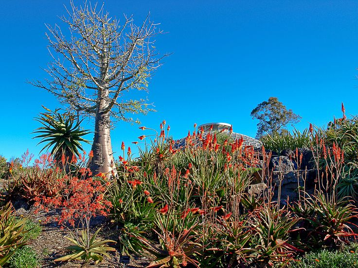 You can find a great contrast out at Brisbane Botanic Gardens. Here's the Arid zone with the Tropical Dome peeking out at the back.