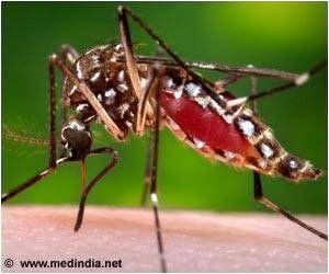Mosquito That Spreads Dengue and Chikungunya Responsible for Transmitting Zika Virus