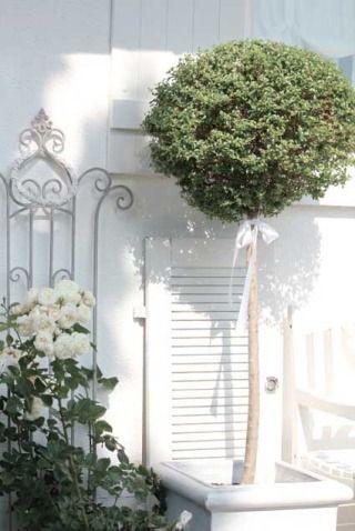 157 Best Garden Whites Images On Pinterest Moon Garden