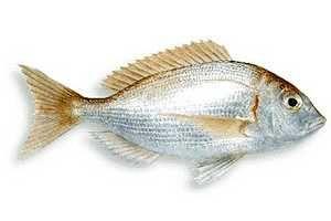 El Pescado Blanco, al igual que el azul, es un excelente alimento con propiedades nutricionales muy importantes. SIGUE LEYENDO EN: http://alimentosparacurar.com/n/3154/propiedades-y-beneficios-del-pescado-blanco.html