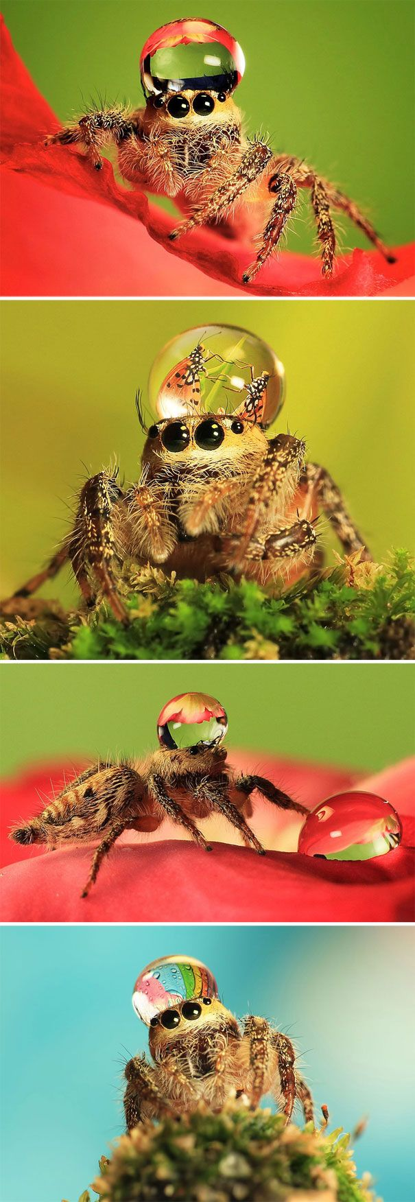 Love these little guys!   Jumping-spider-waterdrop-hats-uda-dennie-adn
