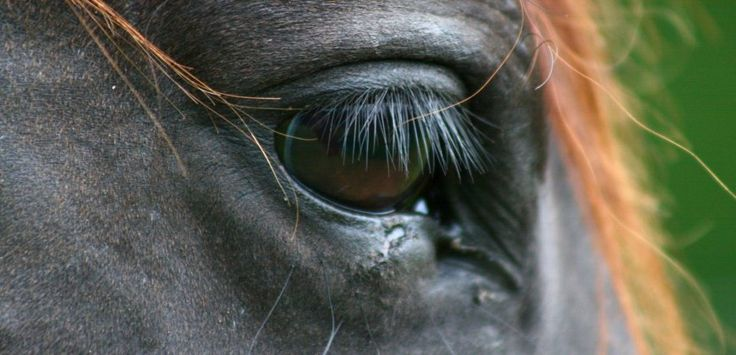 Victims of a multimillion-pound industry, racing horses all too often pay the ultimate price.