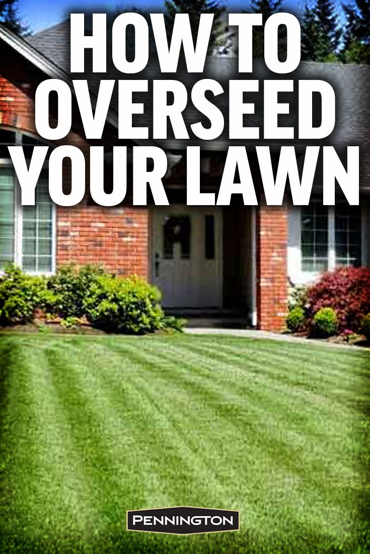 The Secret To A Thick Full Lawn Is Overseeding.