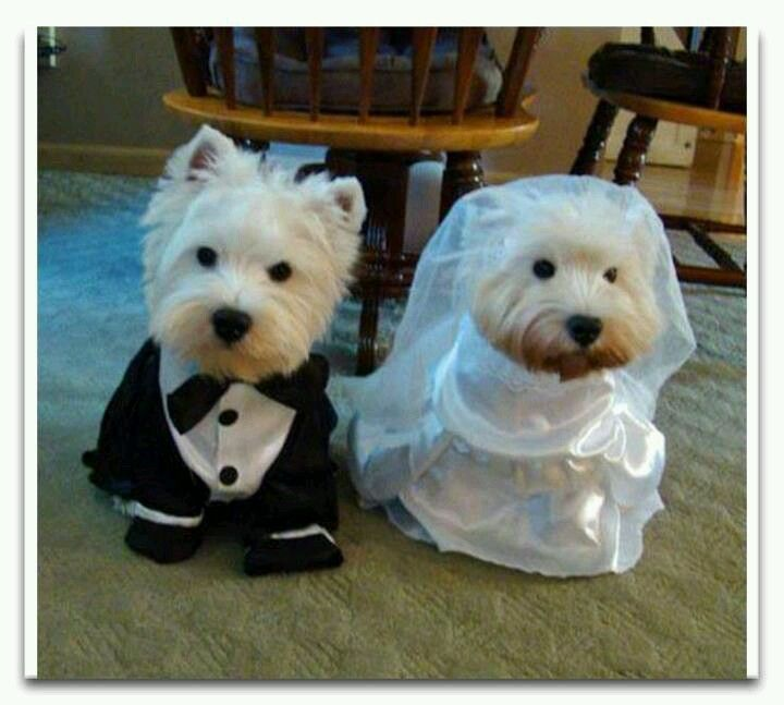 142 best Westie Love images on Pinterest | Westies, Little dogs and ...