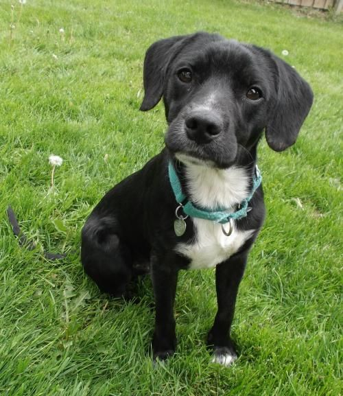 My name is Mingo and I was found abandoned and alone in the mountains of WV. Last Day Dog Rescue came along to save me and now I live with my foster mom in Michigan with other dogs and cats. I get along with everyone, crate trained, learning to walk on a leash is fun with the pack and I have toys of my own now. Not sure how to play with them yet but I am learning. My foster mom says I am beautiful and well behaved so I am getting my confidence back now. I am eager to have my own home with my…