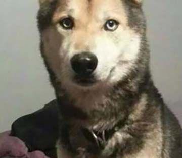 8333 best Wolves images on Pinterest | Wild animals ...