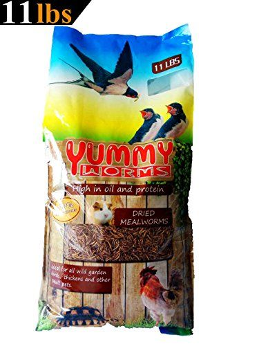 11 LBS Dried Mealworms Bulk Treats for Backyard Chickens and Wild Birds By YUMMYWORMS * Read more reviews of the sponsored product by visiting the affiliate link on the image.