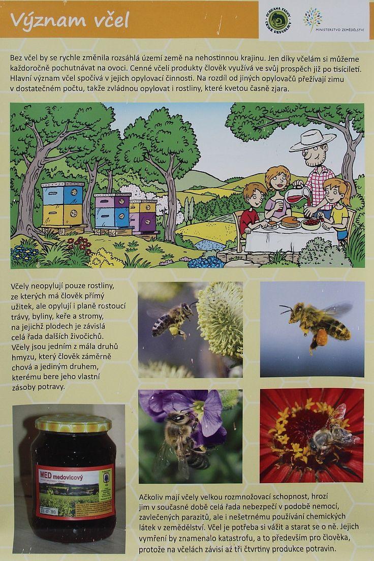 Den Země - včely, projekt Člověk a jeho svět (CZ.1.07/1.1.32/01.0034) - ZŠ Jesenice, okr. Rakovník