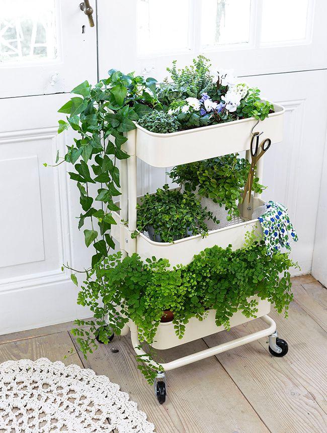 les 639 meilleures images du tableau plantes vertes d 39 int rieur sur pinterest plantes d. Black Bedroom Furniture Sets. Home Design Ideas