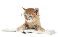 La cura del gatto Persiano
