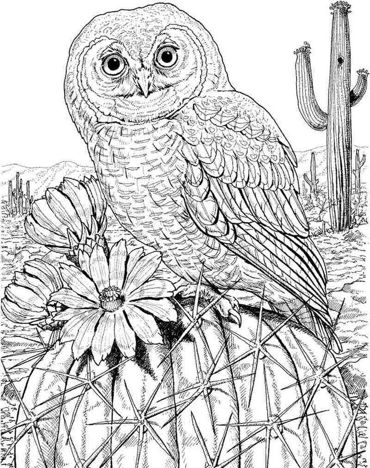 Free Color Pages Owls Bird Coloring Pages Owl Coloring Pages