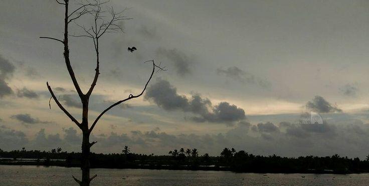 ചേക്കേറുവാനൊരു കൊമ്പ്  Photography by Arun Chullikkal Camera: ZenFone 2
