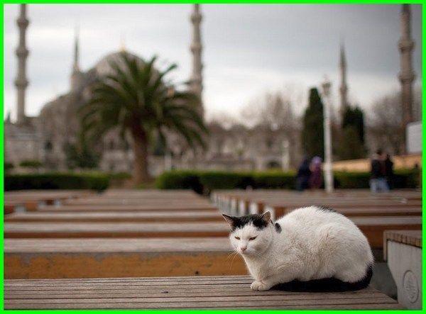 Nama Kucing Jantan Dan Betina Yang Bagus Bahasa Arab Dunia Fauna Hewan Binatang Tumbuhan Di 2020 Hewan Kucing Kucing Betina