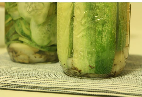 Garlic Dill Refrigerator Pickles (I've never had much luck with ...