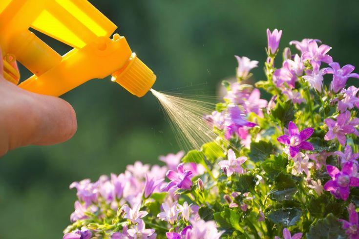 Nem opskrift på hjemmelavet og miljøvenlig spray mod bladlus |...