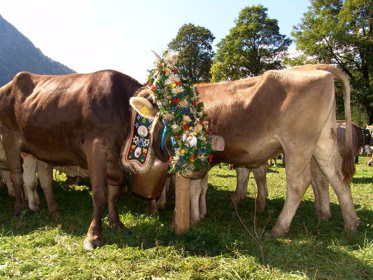 Park Art|My WordPress Blog_Buying Half A Cow Near Me Mississippi