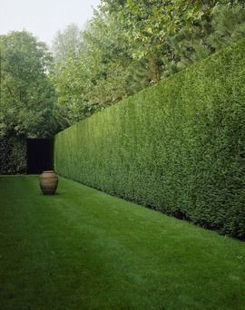 Boxed hedge creates an external room and adds height and structure to the garden