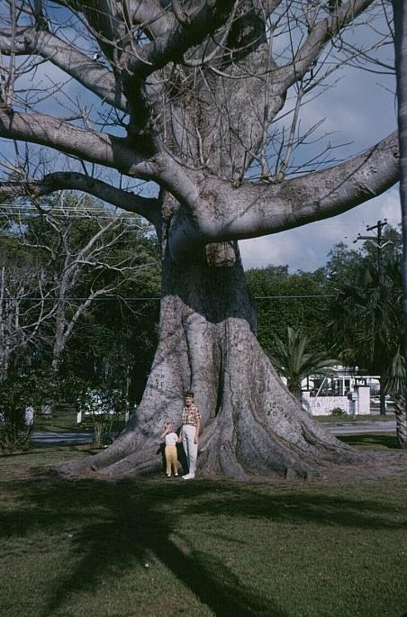 80 Best Florida Kapok Tree Restaurants Images On Pinterest