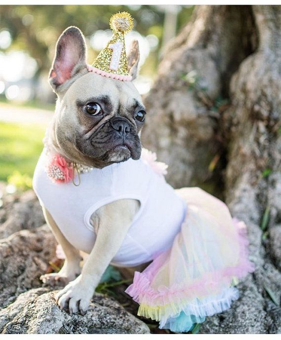 25+ Best Ideas About Dog Birthday Parties On Pinterest
