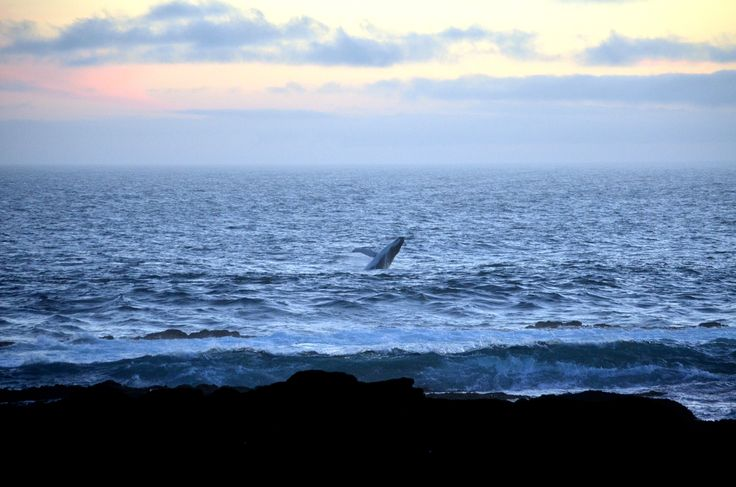 A magical moment at Storms River Mouth campsite and a #humpback #whale by Rosemary Hall