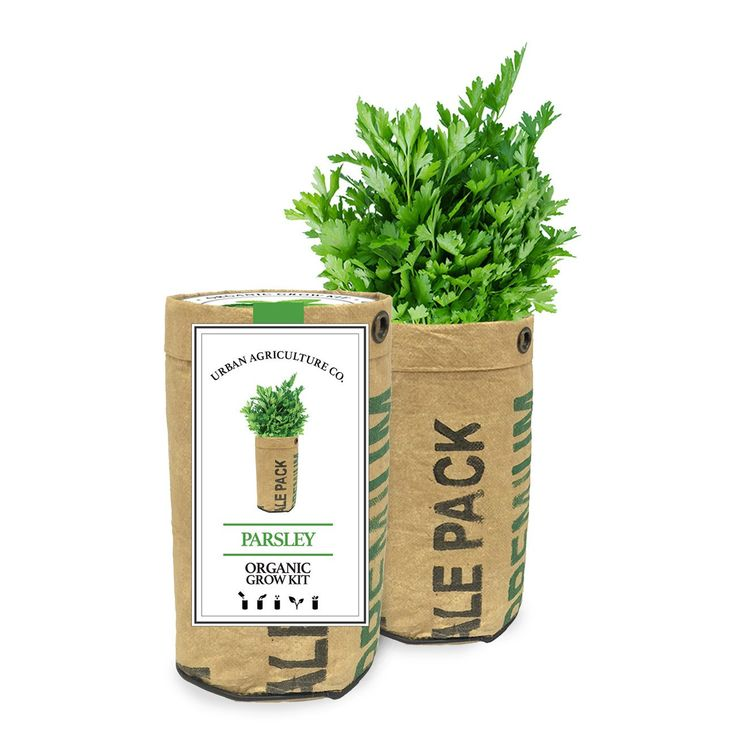 Parsley Grow Kit by the Urban Agriculture Company