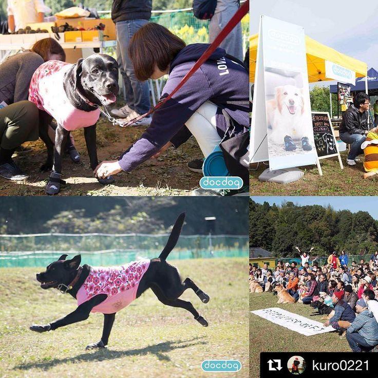 今日の写真はレトリーバーミートに来てくれたくろちゃんです❤️ イベントで犬の靴をご購入いただいた皆様、その後いかがですか?上手に履けていますか?何か分からないことがあれば、SNSでお気軽にご相談ください^ ^  #Repost @kuro0221 with @repostapp ・・・ #レトリバーミート #初めて履いてみた#docdog#犬の靴 #ぎごちない歩き方#╰(*´︶`*)╯♡#可愛い〜❤️ #流石#プロのカメラマン#ナイスショット #DOGSHOES #forthefirsttime#黒ラブ#ラブラドールレトリバー #ラブ#ラブラドール#黒ラブラドール #レトリバー#犬服ハンドメイド  #labradorretreiversofinstagram#labrador #lab#labradorretreiver#blacklabrador#blacklab #アウトバックブーツ