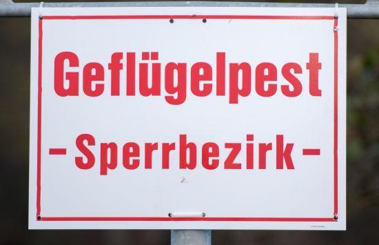 Erster Fall von Vogelgrippe in der Region http://www.morgenweb.de/region/bergstrasser-anzeiger/region-bergstrasse/1.3045580