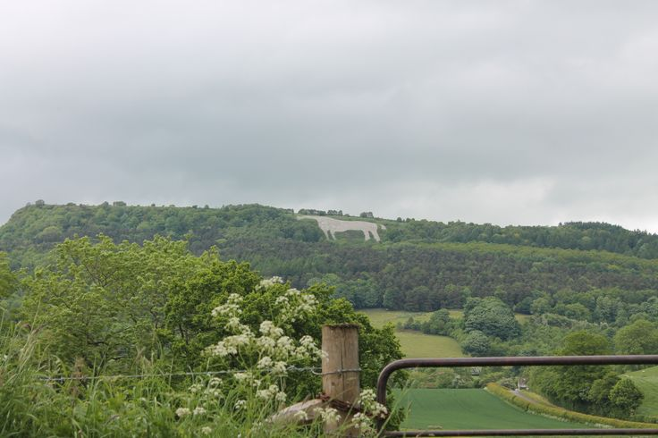 White Horse From Distance