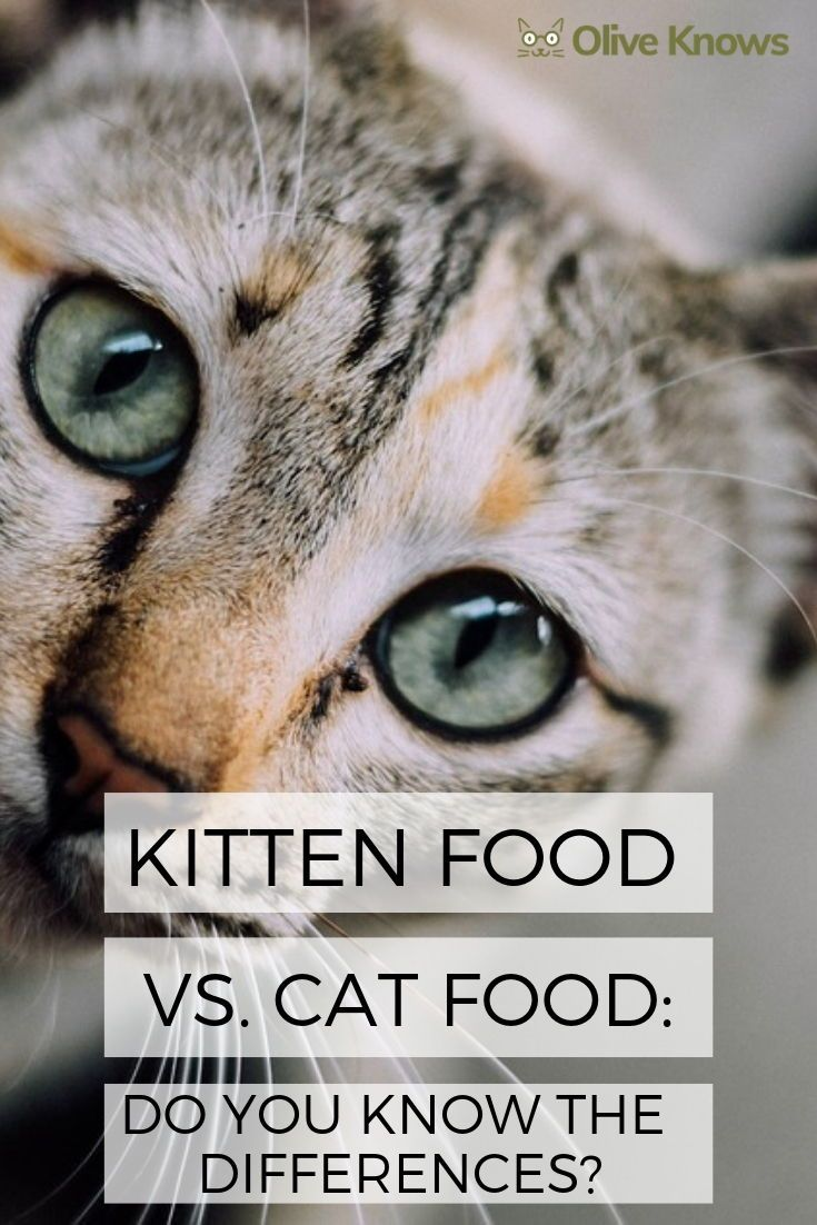 Kitten Food Vs Cat Food Do You Know The Differences Oliveknows Cat Food Kitten Food Cats