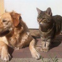 #dogalize Sideremia nel cane o nel gatto: cos'è, cause e soluzioni #dogs #cats #pets