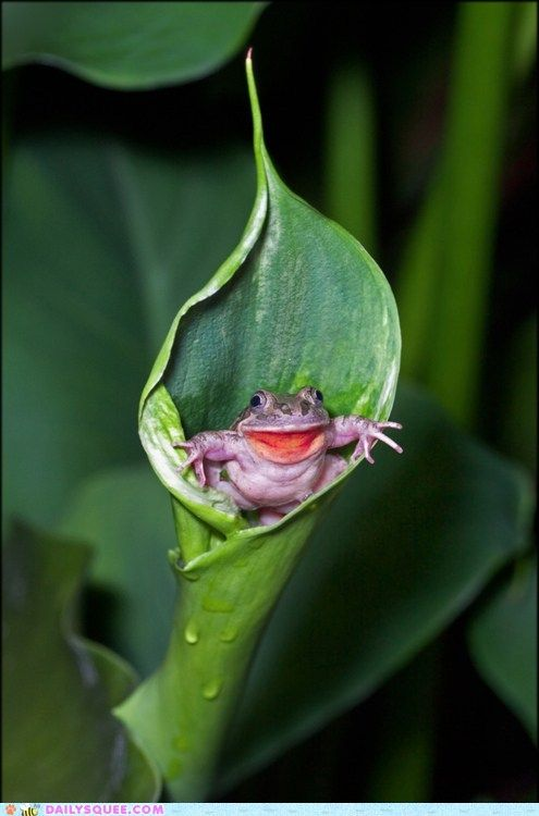 Well hello!Reptiles, Nature, Peek A Boos, Froggy, Creatures, Smile, Frogs, Amphibians, Animal