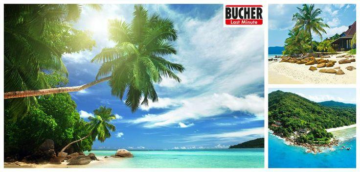 #indischerozean #bucherreisen   Du musst dich nur noch entscheiden - Seychellen oder Malediven? ;-) #bucherreisen #indischerozean #urlaub #reiselust