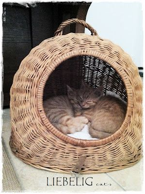 how cute is this cat basket:)