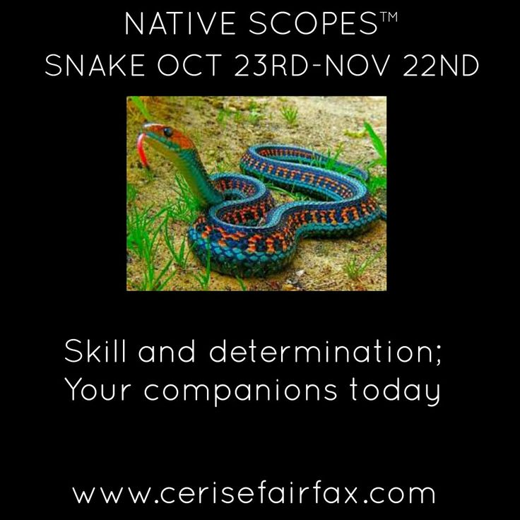#native #nativehoroscopes #Nativeastrology #horoscope #astrology #today #horoscopes #birthday #zodiacsigns #zodiac #horoscope #aboriginal #nativescopes #animals #spiritanimal #Indianteachings #indigenous #aries #taurus #gemini  #cancer #leo #virgo #libra #scorpio #Sagittarius #capricorn #aquarius #pisces #celebrities #cerise