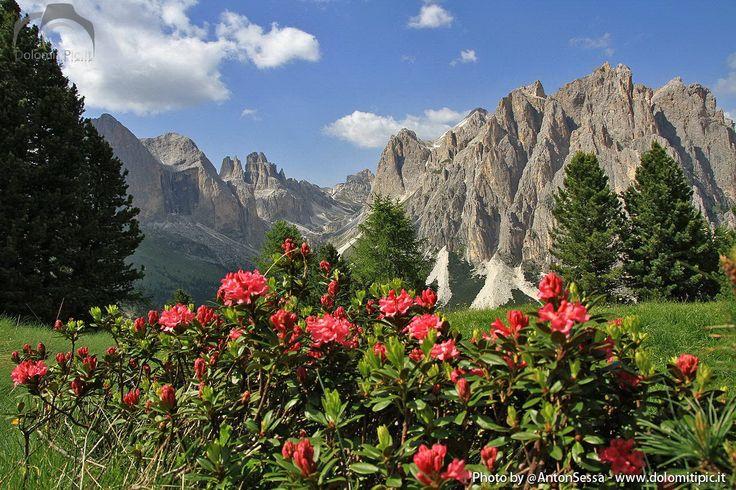 Beautiful #Dolomites landscape #valdifassa