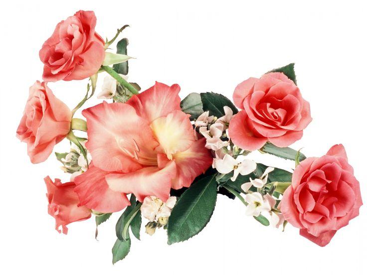 růže obrázky, lilie tapety, složení vektor, květiny pozadí, list materiál
