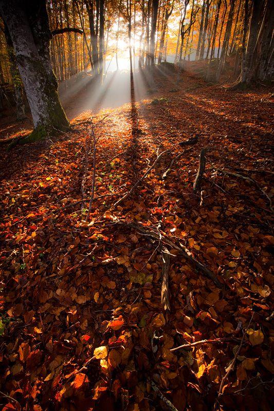 mistymorningme   Back to the Land… © vincentfavre Vercors Natural Park , France