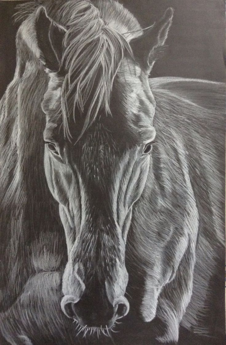 dessin cheval crayon blanc sur fond noir animaux art pinterest crayons. Black Bedroom Furniture Sets. Home Design Ideas