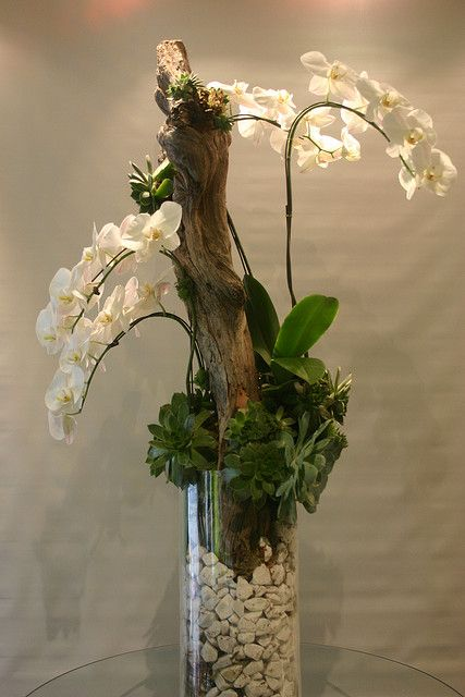 Orchid with succulents and driftwood flickr photo