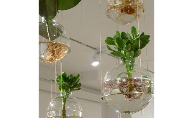 How to Care for Hanging Plants   Wayfair